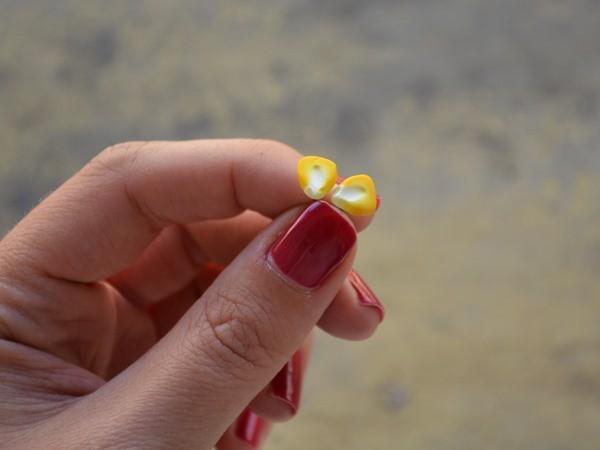 Mali uhani Koruzna zrna
